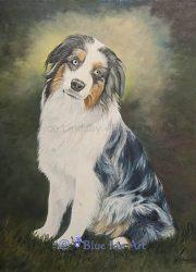 Australian Shepherd Oil Portrait